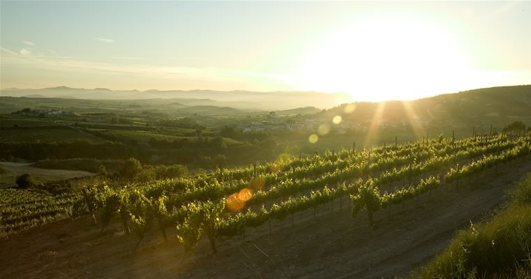 Activities in the Penedes area